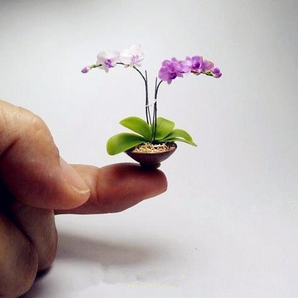 Seeds of bonsai tree