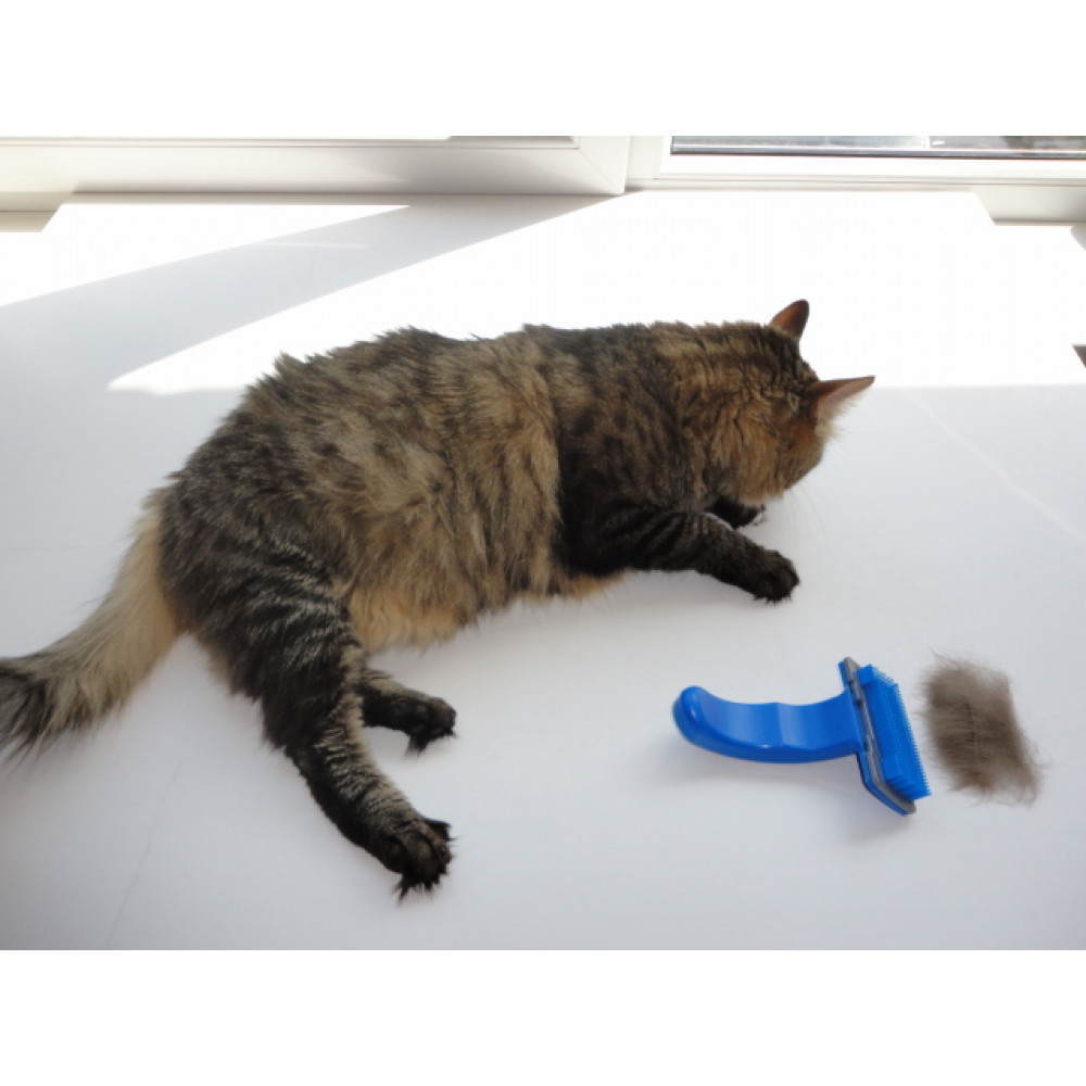 Automatic pet brush